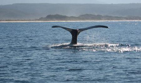 tutela animali reazioni stop caccia balene