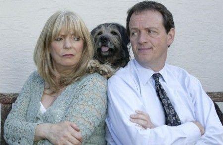 animali divorzi