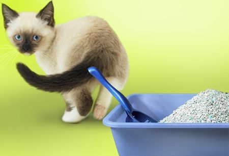 impatto ambientale lettiere gatti biodegradabili