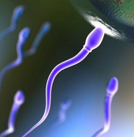 infertilita maschile inquinamento