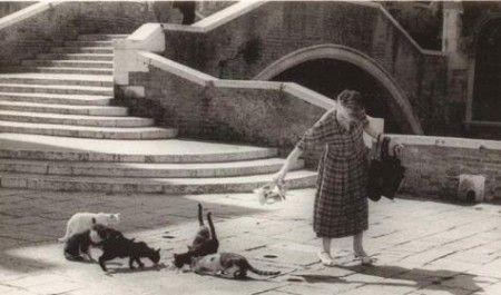 tutela animali gattara