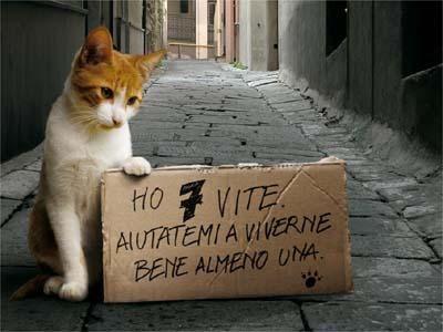 gatto abbandono