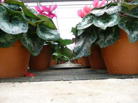 impatto ambientale vaso biodegradabile