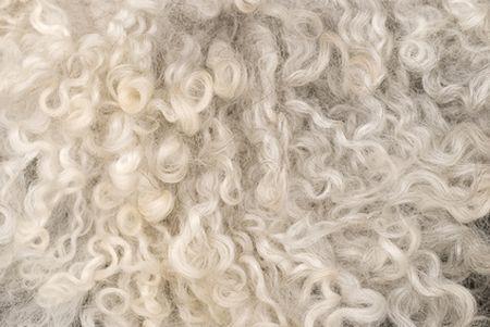 inquinamento petrolio lana