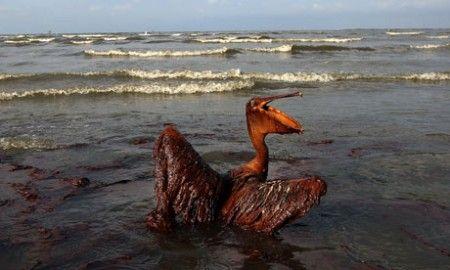 marea nera golfo messico mare