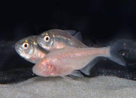 pesci insonnia