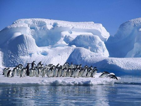 protezione animali rischio pinguini antartide