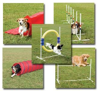 agility dog cani
