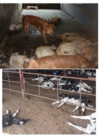 animali fukushima