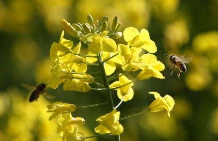api cellulare