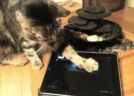 app ipad gatti