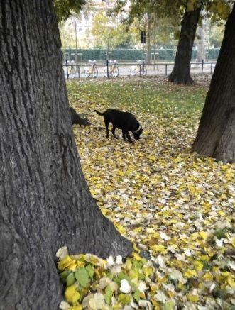 aree per cani a milano