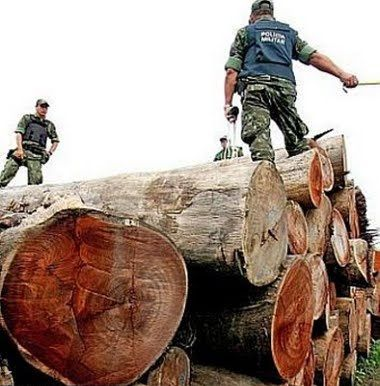 deforestazione terra