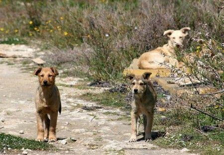 maltrattamento animali avvelenamento