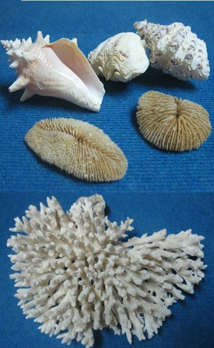 museo della biodiversita gragnano conchiglie corallo