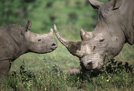 protezione animali bracconaggio rinoceronti