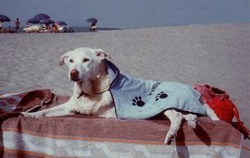 spiaggia cani peschiera