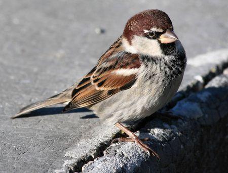 uccelli mondo agricolo specie in diminuzione