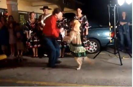 video cane balla merengue