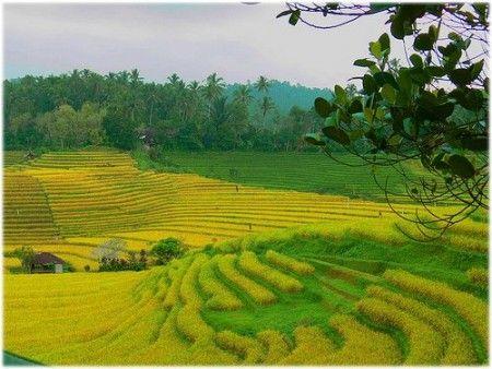 agricoltura biologica standard