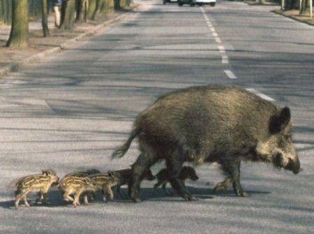 animali sensore guida