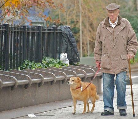 cane nonno