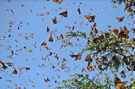 insetti invasione