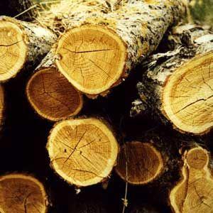 legno greenpeace