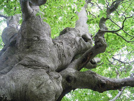 sostenibilita ambientale chilometri alberi