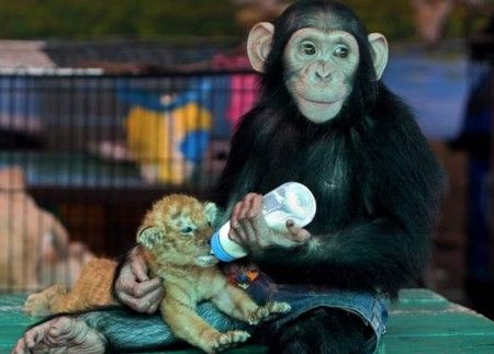 animali zoo bangkok thailandia