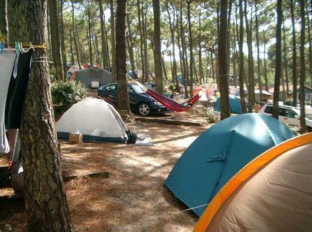 campeggio verde