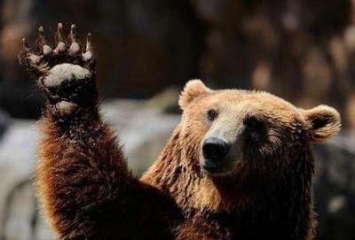 carne orso lega