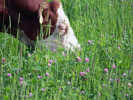 energie rinnovabili enzimi stomaco mucche