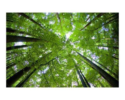 foreste virtuali