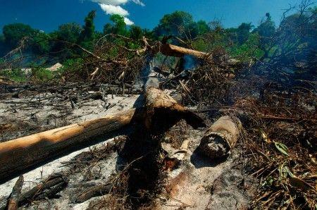 tutela ambiente foresta amazzonica