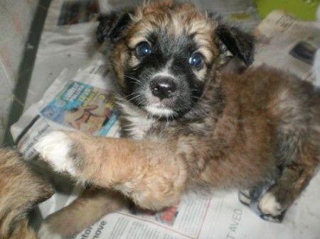 vendita cuccioli cane appena nati