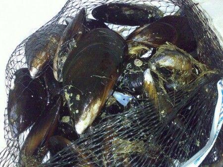 inquinamento mare regione puglia cozze diossina
