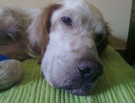 protezione animali cane abbandonato rifiuti palermo