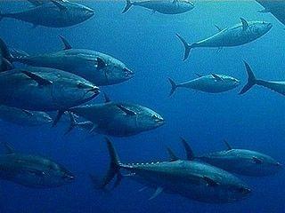 protezione animali pesca tonno