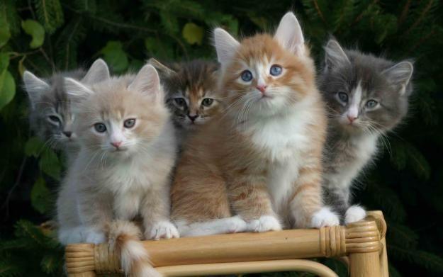 animali_domestici_vita_gatti_cuccioli