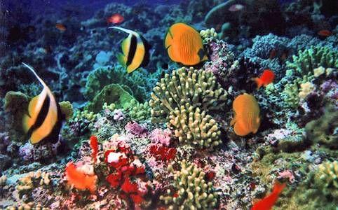 barriera_corallina_haiti_tutela_ambientale
