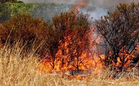 bosco_italia_fuoco_fiamme