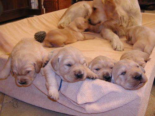 cuccioli_regalo_adozione_cani