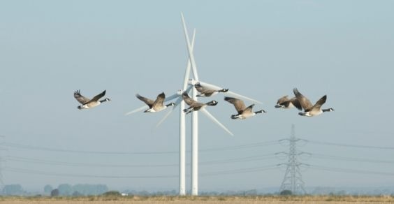 energia_eolica_protezione_animali_uccelli