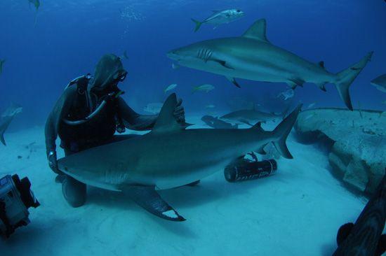 mare_jesolo_animali_pericolosi_shark_week