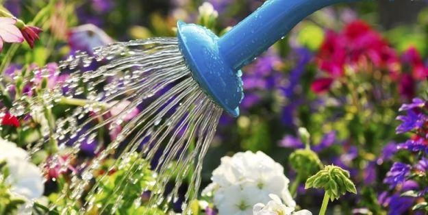 giardinaggio_fai_da_te_piante_giardino