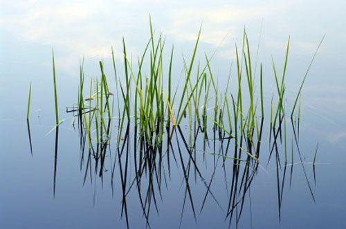 piante_verdi_sotto_acqua_ricerca_scientifica