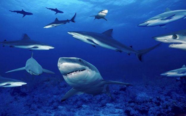 sharklife progetto europeo proteggere squali
