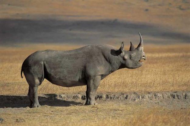 protezione animali mammiferi rischio estinzione