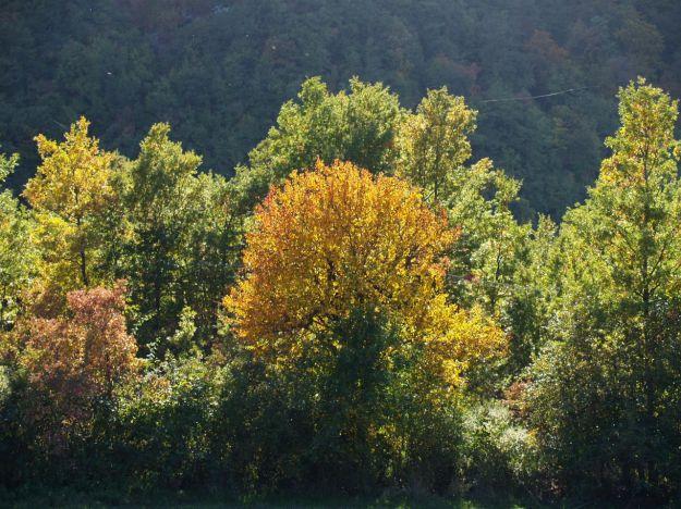 taglio_alberi_salvare_pianeta_terra